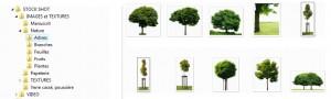 Ma petite collection d'arbres détourés, qui s'agrandit au grè des projets